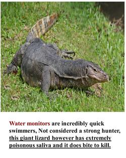 Water monitors
