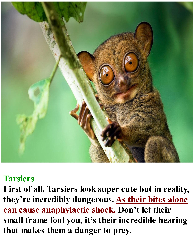 Tarsiers