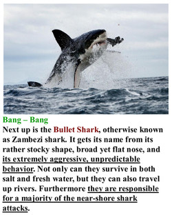 Bullet Shark