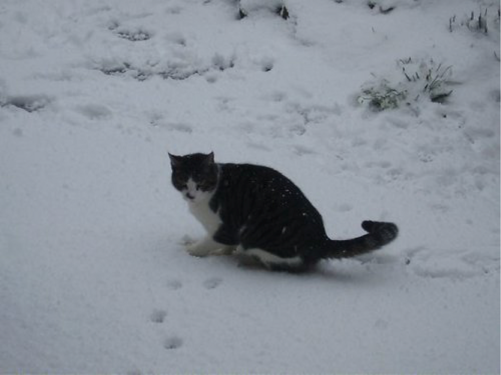 Cornelius in the snow