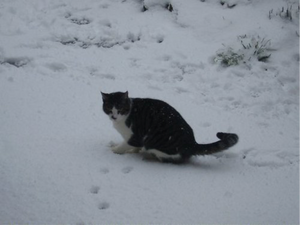 Cornelius in the snow