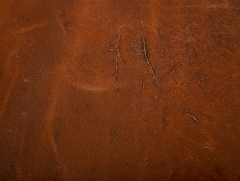 Saiga Antelope grainside