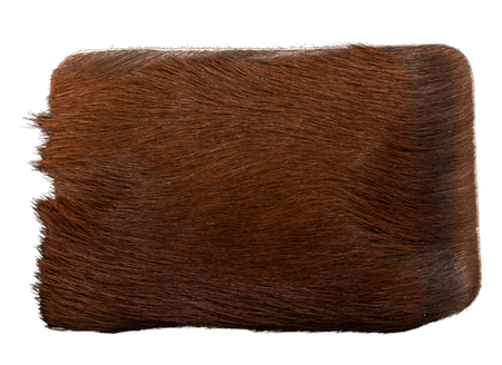 Steppe chestnut brown example 2b