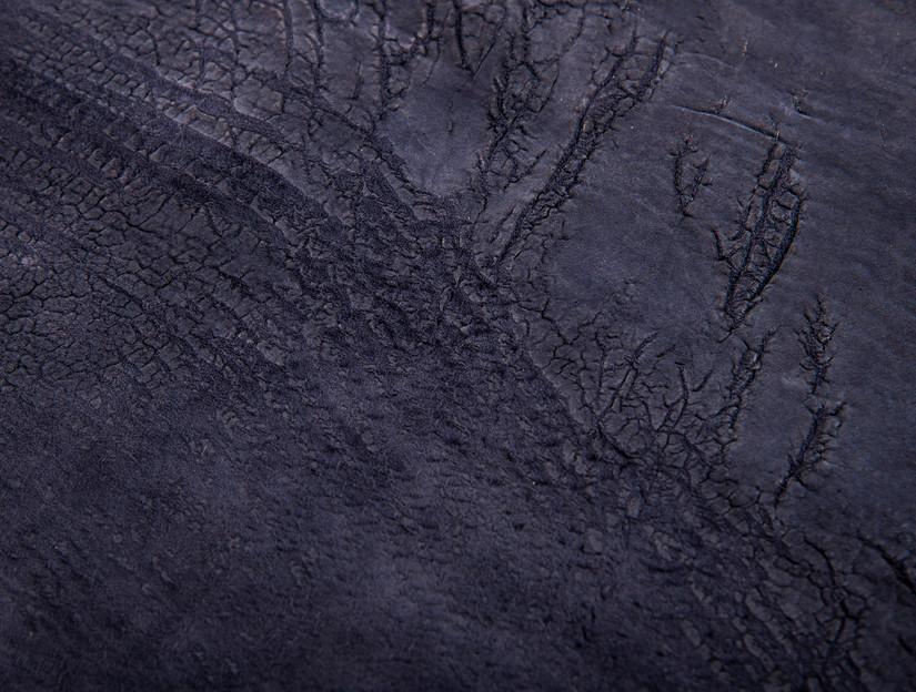 Demoiselle Cranes backside detail