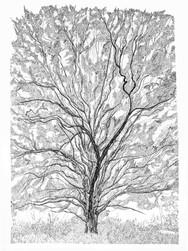 TreeHeath.jpg