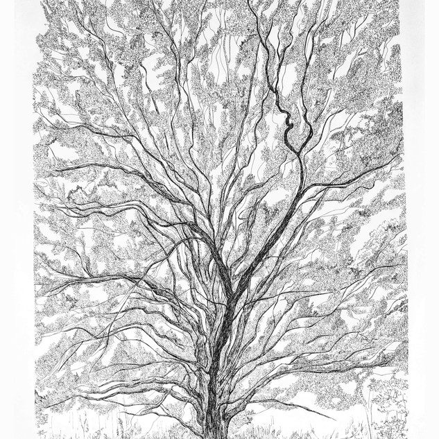 Tree Wider1.jpg