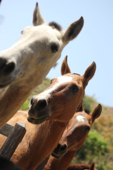 cavalo3.jpg