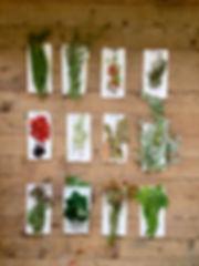 Färberpflanzen_Ateliervert_NinaGautier.J