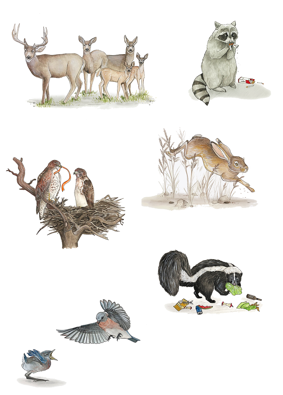 Lauren Sarantopulos illustrations
