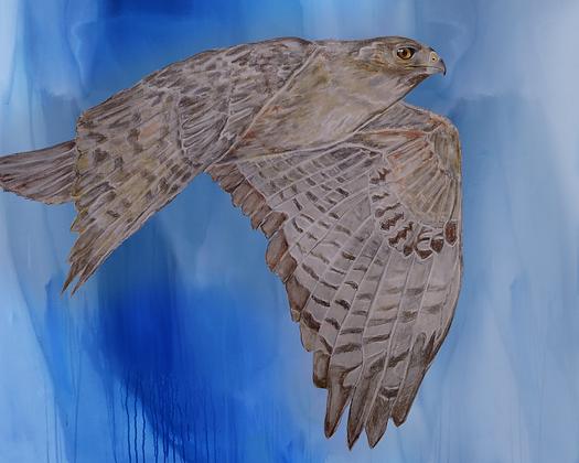 Red Tail Hawk art