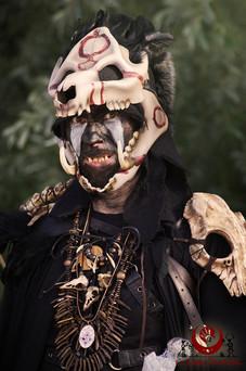 Crâne de sanglier
