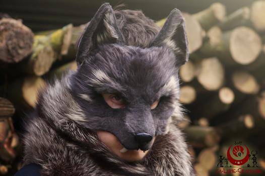Loup gris et sable