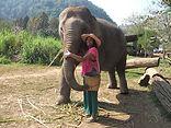 elephant - Kani Ilangovan.JPG
