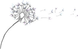 Dandelion-100 (1).jpg