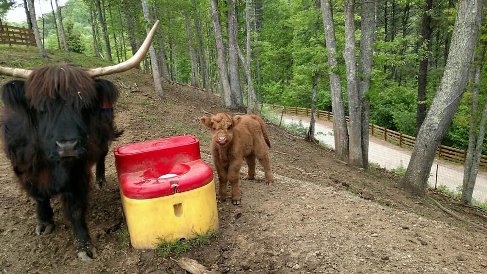 Baby farm animal at Majors Estate