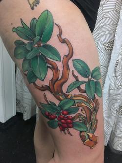 Madrona Branch