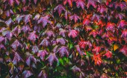 mt-macedon-in-autumn-3