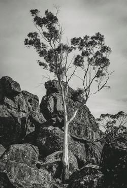 lone-gum-hanging-rock