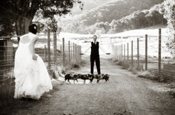 Gracebrook-Winery-Wedding
