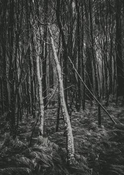 mount-macedon-trees