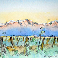 Vineyard near Mendoza, Argentina