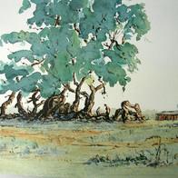 Treescape, Santa Susana Estate, Argentina