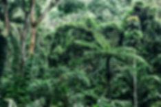 Saving the Daintree rainforest