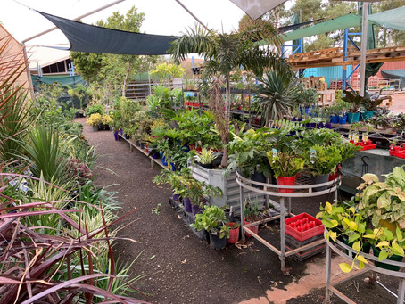 NEW PLANT STOCKS . . .  6 pallets of plants :)                 Fresh Veggies and Herbs due 15/06/19