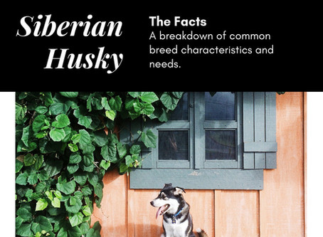 10 Facts About Huskies You Need To Know Before You Get One. #100DogBreedChallenge