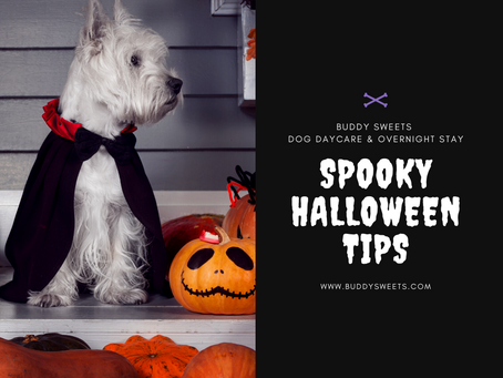 Spooky Halloween Tips for Your Pets