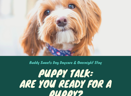 Puppy Talk: Are you Ready for a Puppy?