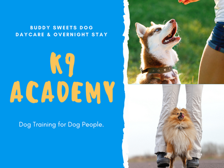 Introducing Buddy Sweets K9 Academy.