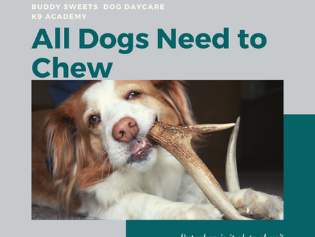 All Dogs Need to Chew