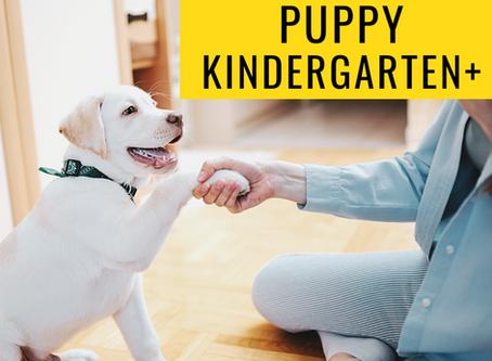5 Reasons to Take Virtual Dog Training Classes