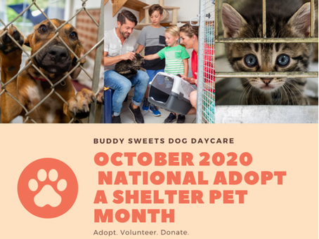 October is National Adopt A Shelter Pet Month