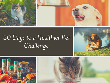 30 Days to a Healthier Pet Challenge
