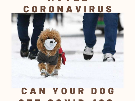 Novel Coronavirus- Can Your Dog get COVID-19?