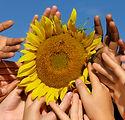 Hands and Sunflower.jpg