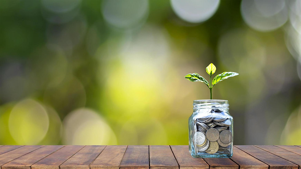 growing-plant-on-a-money-bottle-on-a-woo