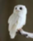 Screen Shot 2020-04-10 at 4.47.57 PM.png