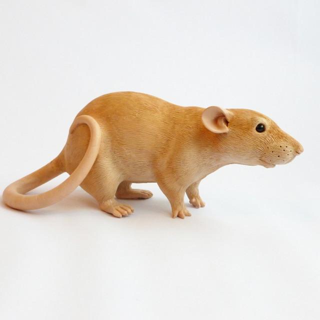 Topaz Fancy Rat