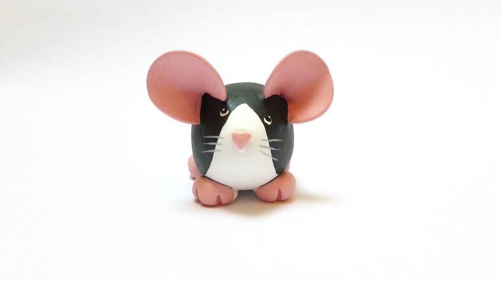 Black Blazed Berkshire Dumpy Rat