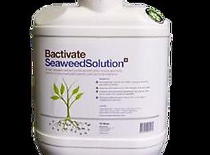 Organic Seaweed Cocentrate