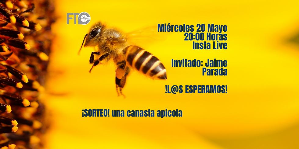 CONVERSACIÓN NECESARIA: Las abejas 🐝