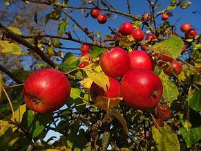 vente directe jus de pomme, cidre, vinaigre et gelée de cidre entre Vernon et Gisors (Haute Normandie)