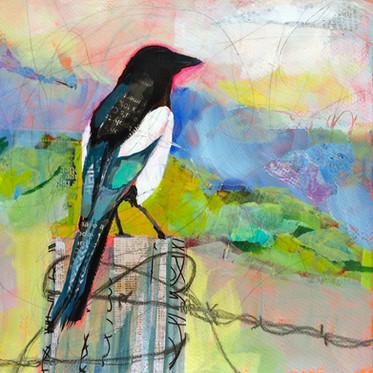 Magpie at Dawn