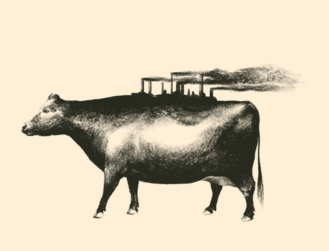 The Decade of Mad Cow Disease