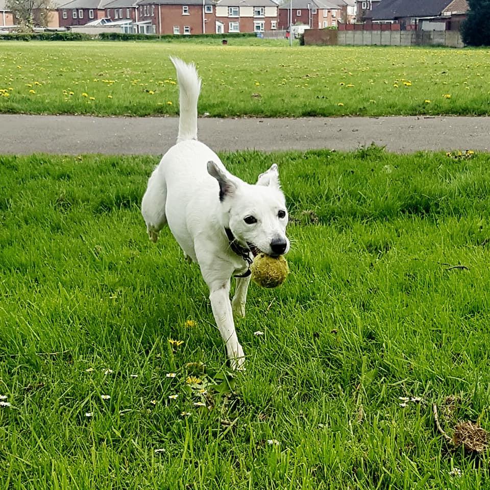 Ball - Barnsley - Dog Walker - Fetch
