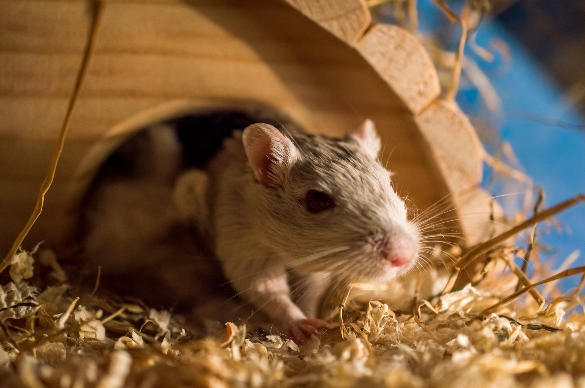 Home Visits - Barnsley - Pop in - Small Animal Care