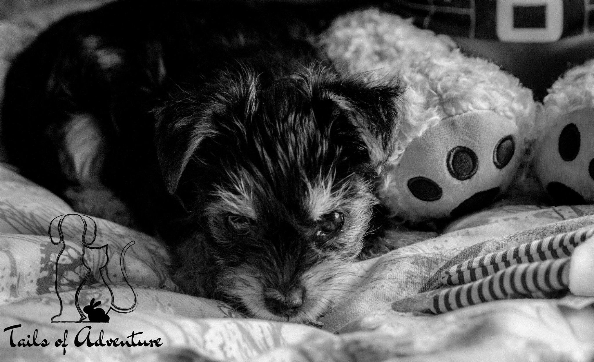 Photography - Barnsley - Dog Walker - Photos